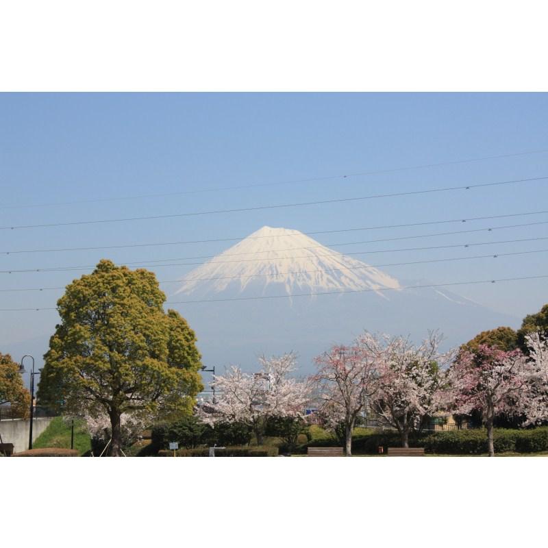 http://fujipark.com/chuuou/images/IMG_7931.jpg
